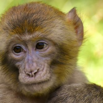 Monkey Business – Wer hat die Kokosnuss geklaut?